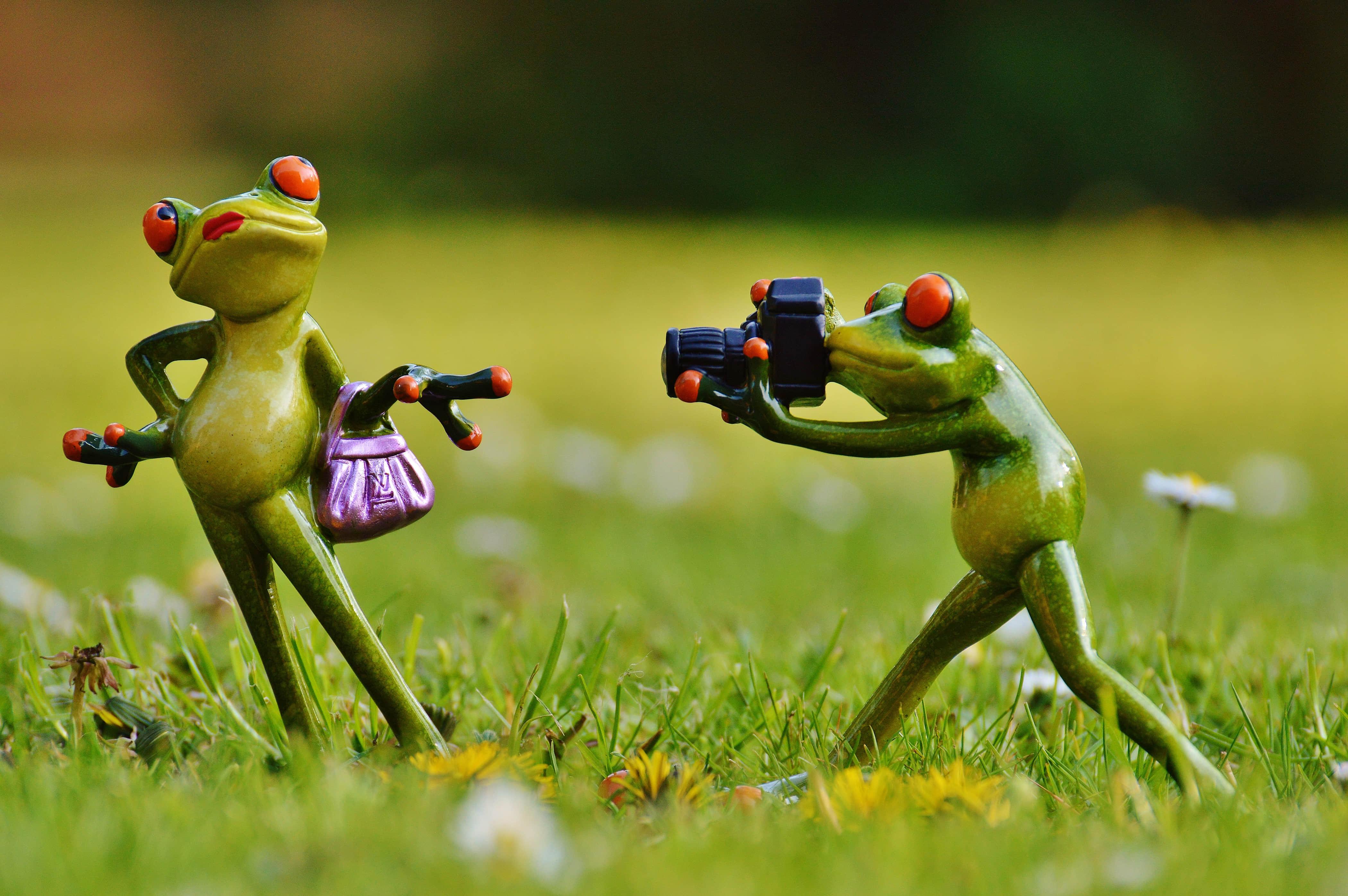 青蛙 摄影师 可爱 有趣 4K壁纸_彼岸图网